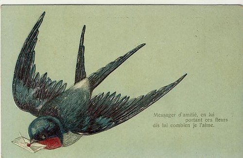 Vintage Postcard ~ Swallow