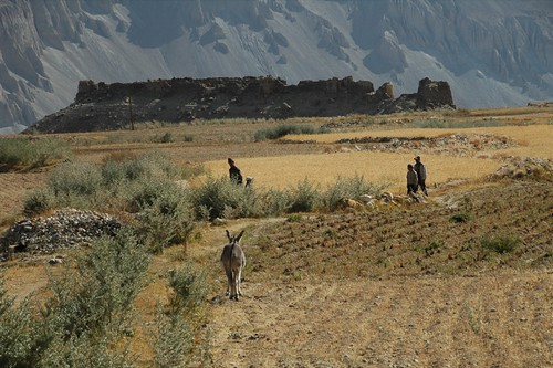 Donkeys and Agriculture - Wakhan Valley, Tajikistan