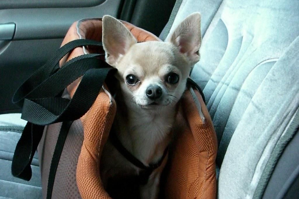 transport psa w torebce