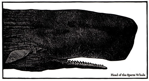moby_dick_moser_1