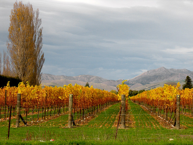 Marlborough, New Zealand