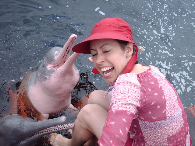 pink dolphins' party