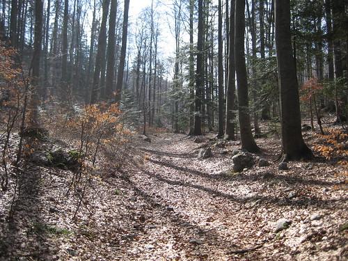 road wood trees nature leaves forest spring trail slovenia monte slovenija karst carso nevoso ♥avision♥ sviščaki chiarasirotti