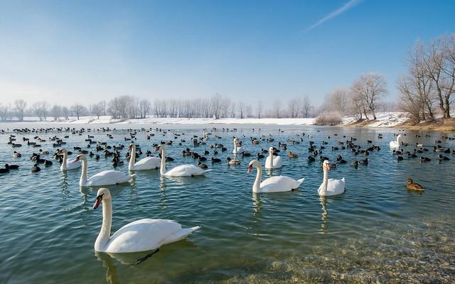 lake Zajarki (095)
