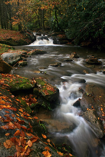 Autumn Along Trout Creek