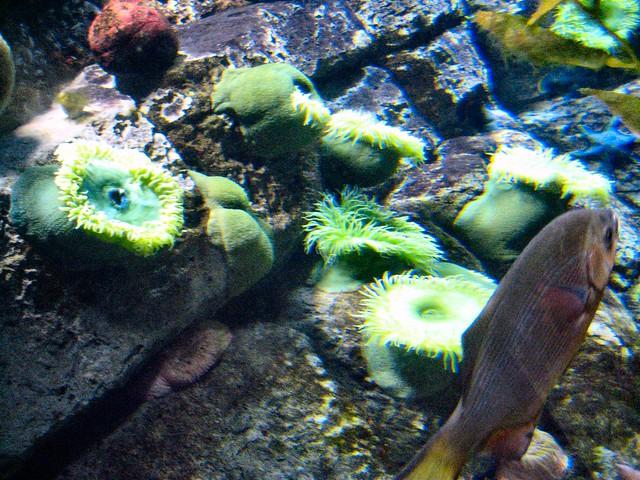 Omaha Zoo Aquarium Flickr Photo Sharing