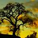 Lone Oak by dantuyhoa