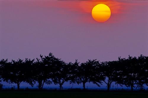 sunset film japan twilight dusk sakura 500mm 2008 佐倉 nikonf6 印旛沼 imbanumamarsh 黄昏刻