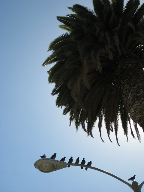 Palmtree and birds