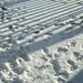 Small photo of Snow Prints