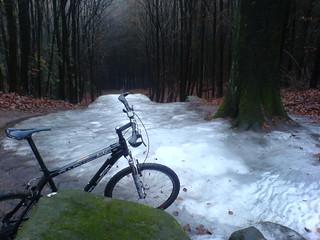 Pfälzer-Wald 30-12-2007