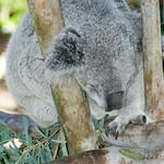 San Diego Zoo 106