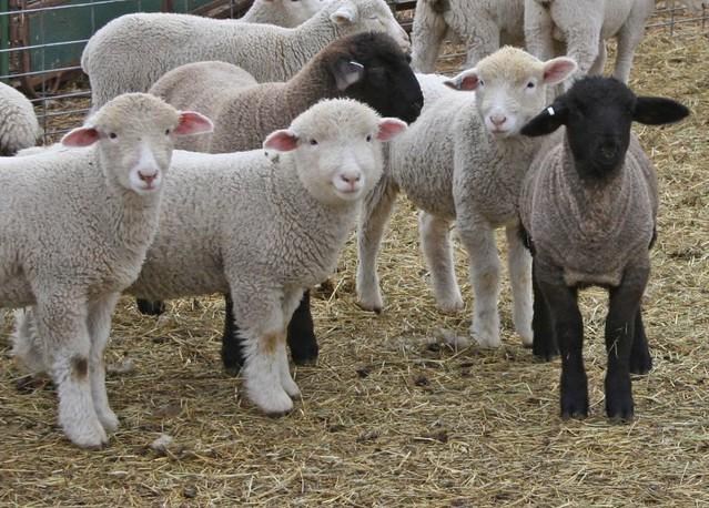 """Feed My Lambs"""