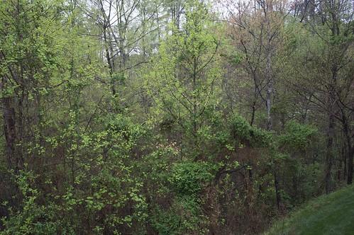 Spring Rain 3