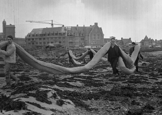 Roscoff - Marée noire 1967