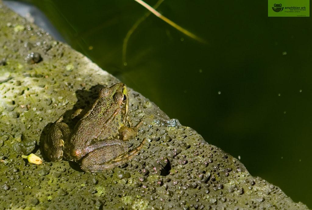 2008 Year of the frog by Joe Taruga