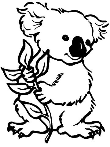Flickr photo sharing for Koalas coloring pages