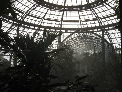 rainforest in a greenhouse