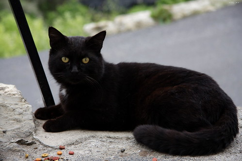 italy italia liguria sguardo miao 2008 gatto nero airole frrr mywinners jodyart jodysticca adoroigatti