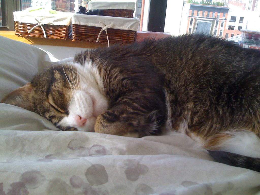 cat asleep photo