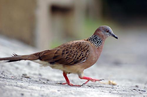 ... dara punya burung? kalo semua dara suka … | Flickr - Photo Sharing