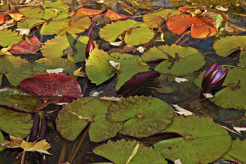 zoo birmingham lotus alabama lilypad