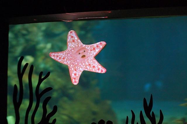 finding nemo star fish