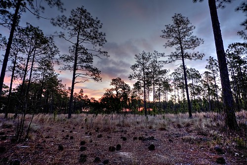 hdr sunrise sun smith lake pine pinecones landscape trees 12mm woods nature