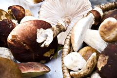 pleurotus eryngii, medicinal mushroom, agaricus, mushroom, agaricaceae, bolete, produce, fungus, matsutake, penny bun, champignon, edible mushroom, shiitake,