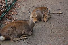 wallaby(0.0), animal(1.0), zoo(1.0), marsupial(1.0), mammal(1.0), kangaroo(1.0), fauna(1.0), white-tailed deer(1.0), wildlife(1.0),