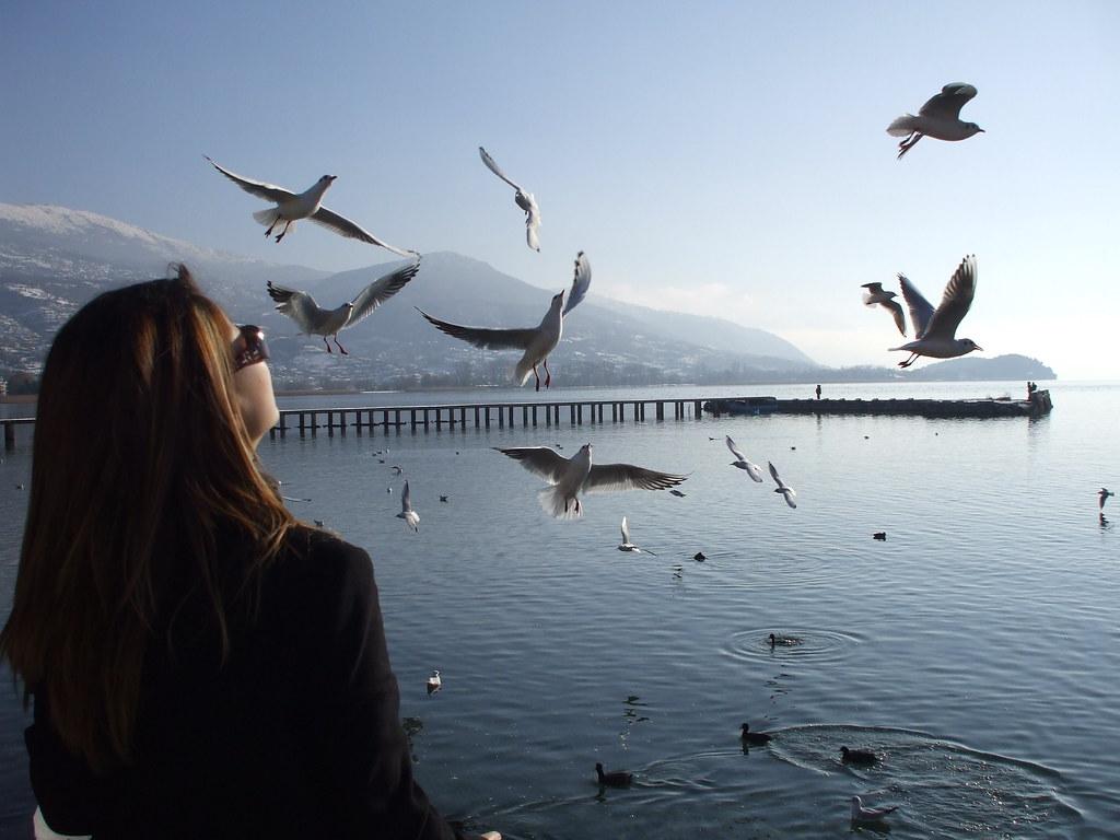 Feeding Ohrid seagulls & swans