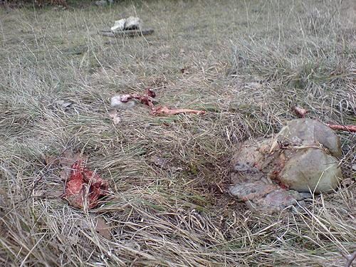 Image Result For Friedhof Der Kuscheltiere