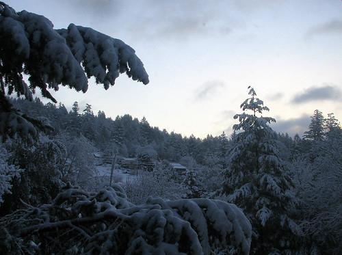 trees sky snow sunrise
