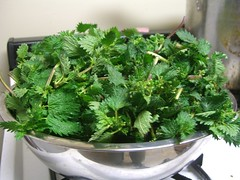 annual plant, vegetable, leaf vegetable, herb, produce, rapini, food, fines herbes,