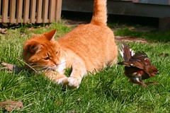 Cat Catches Bird, Almost