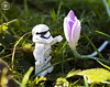 Stormtrooper with flower
