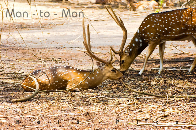 Man - to - Man