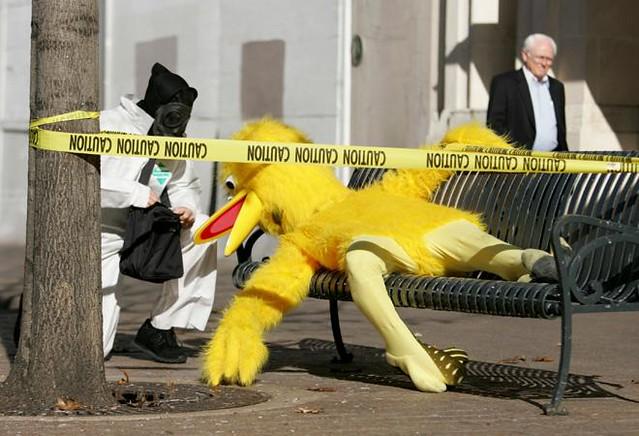 Dead Big Bird in Washington, DC