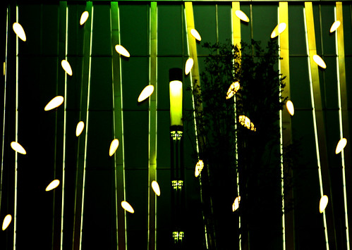bamboo in a city
