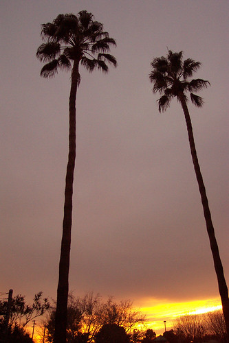 sunset arizona palms gilbert dorsalfin gilbertarizona diamondclassphotographer flickrdiamond onlythebestare theperfectphotographer