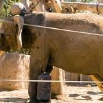 San Diego Zoo 093