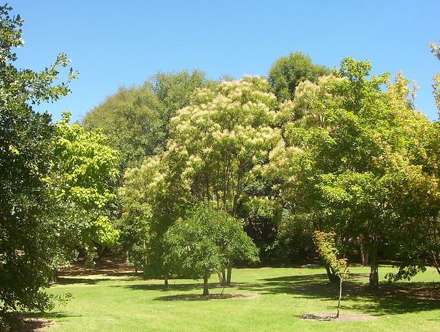 Mount Lofty Botanic Gardens Mount Lofty Botanic Gardens