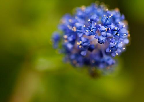 Macro blue