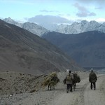 Donkeys Walking Home - Wakhan Valley, Tajikistan