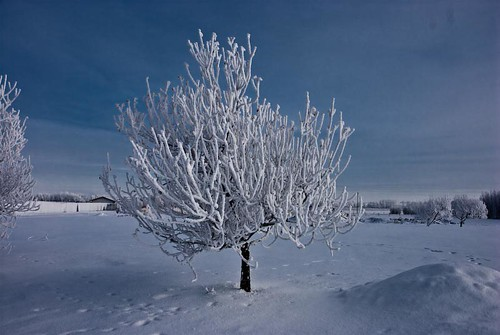 Winter Tree IV