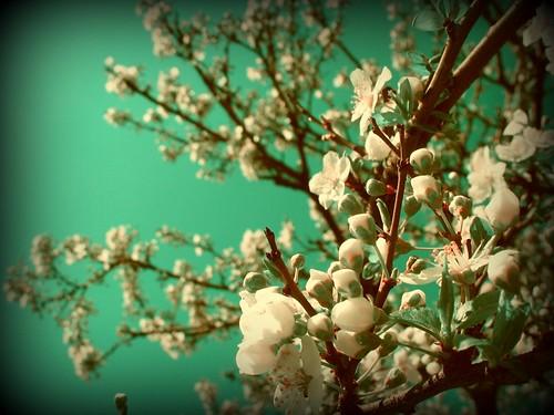 spring explore frontpage picnik
