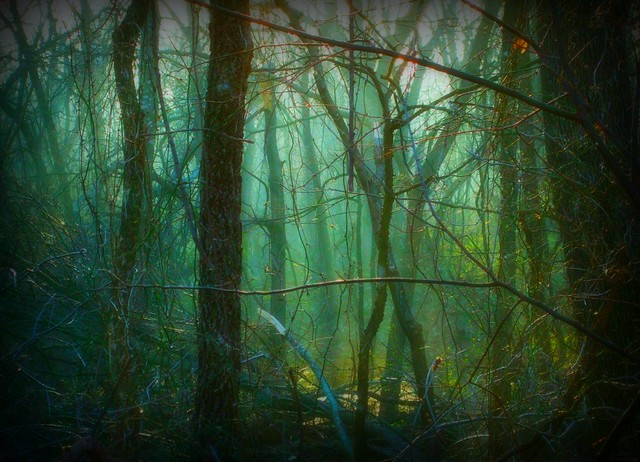 Misty Morning In A Wild Forest