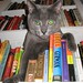 Bookcase kitty II by khatt