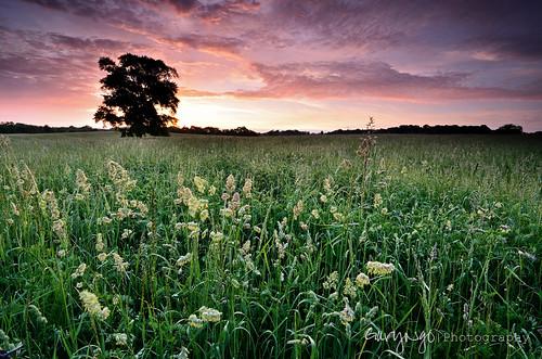 sunset tree green grass sunrise landscape spring nikon maryland filter lone 1224mm hitech gaithersburg gnd gradnd d7000