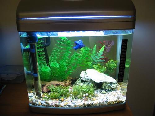 Betta fish tanks 60l posted by shil on avforums aqua for Betta fish tank